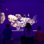 museo_del_tartufo_acqualagna4